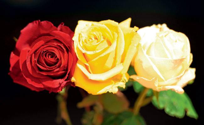 flores_ITAPEVA